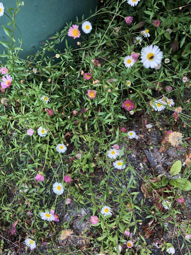 Cute little wild flowers in a potter.