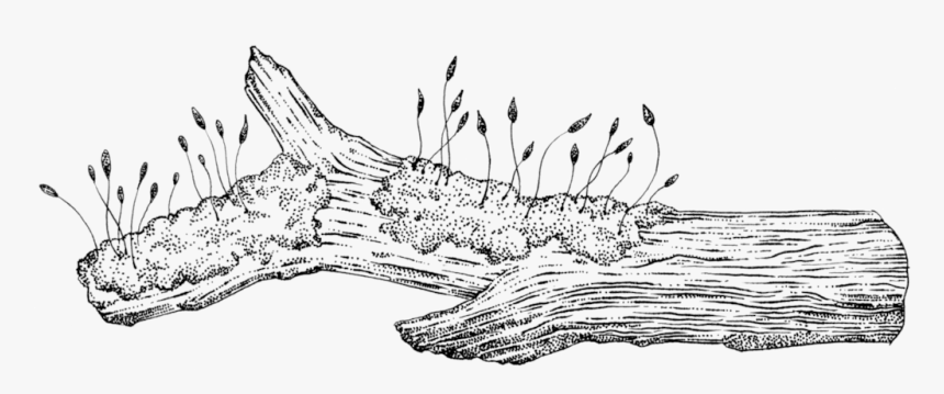 A line drawing of a log where little sprouts are growing from a spot of moss on it.