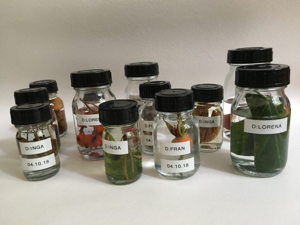 Assorted glass jars with fruits, leaves, and different green life in them submerged in a clear liquid. On the jars are different names labeled, like Lorena, Fran, and Inga.