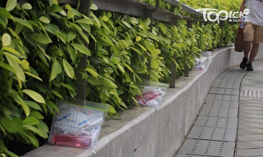 First-aid kits that looks like zip-lock bags with pink disinfectant solution, saline and bandages, were left along the roadside next to some plants. They were arranged in a straight line around 1 metre apart.