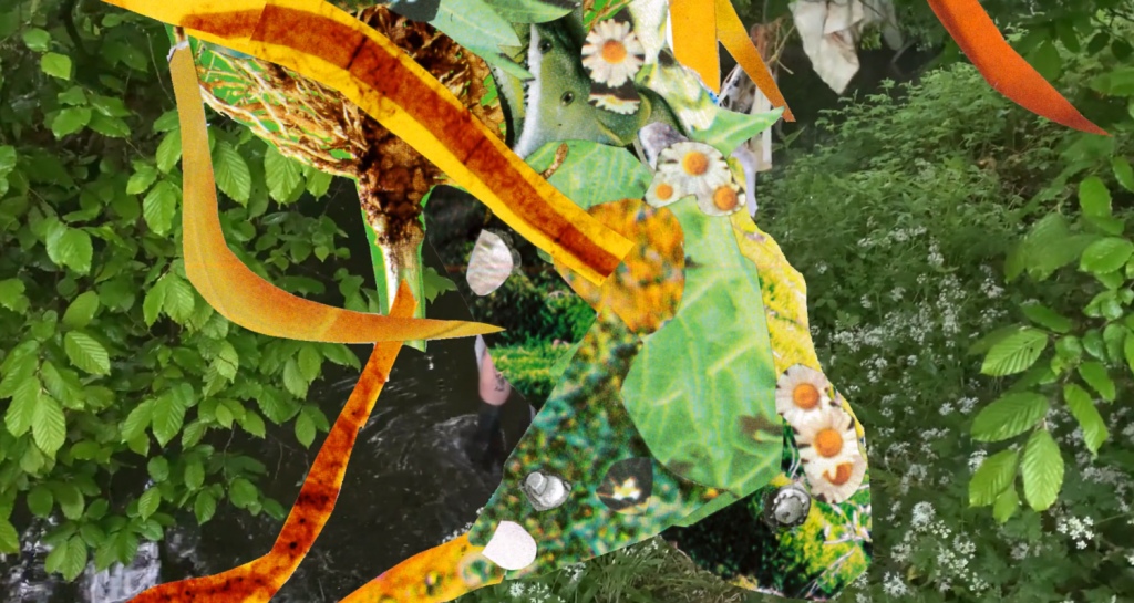 A collage of green leaves, white daisies with yellow centres, and stripes of yellow and red streak across the image.