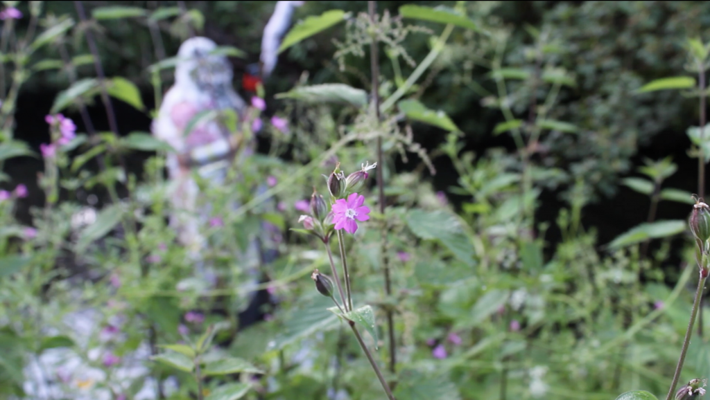 small purple flower in focus AND cow parsley, nettles AND monster body in the background with a big stick